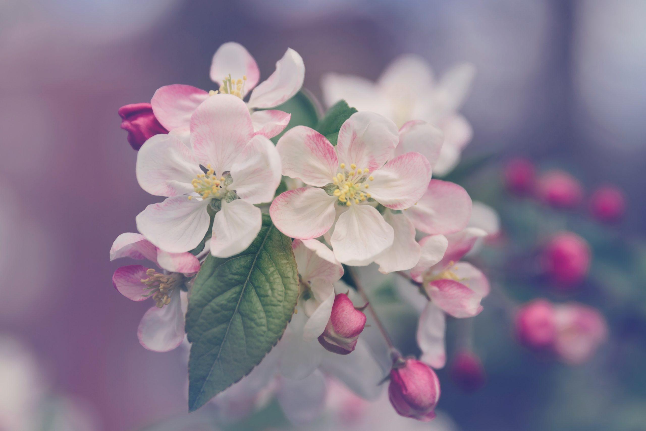 Flower Fresh