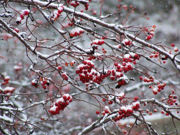 christmas mindfulness tips & clips
