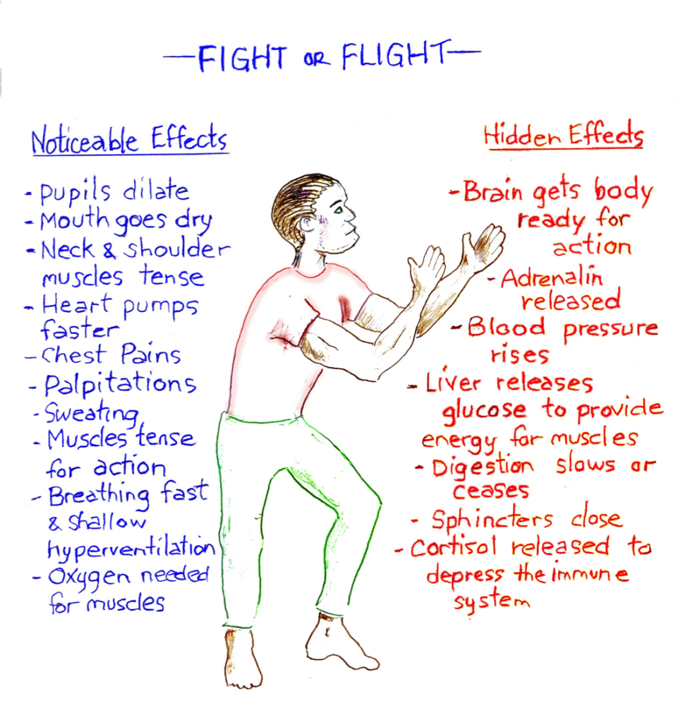 describe the fight or flight system Chronic stress can have a serious impact on our physical as well as psychological health due to sustained high levels of the chemicals released in the 'fight or flight' response.